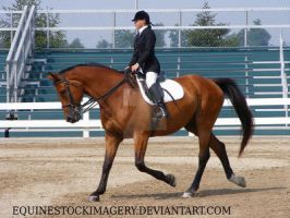 Trakehner 1 by EquineStockImagery