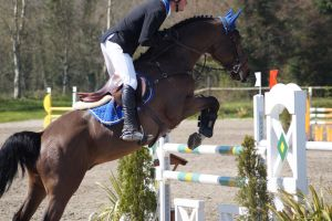 Bay Horse - Show Jumping Stock 9.3 by MagicLecktra