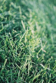 grass. by lysdexicnorebo