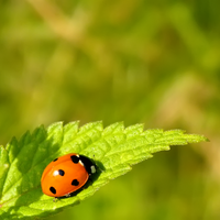 Ladybug on leave by Bhesi