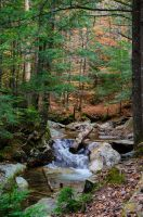 White Mountains  Fall Foliage  224 by FairieGoodMother