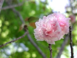 Flower - April 3 2005 by telophase