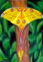 Day 192 - ACEO Drawing Project for Charity by secrets-of-the-pen