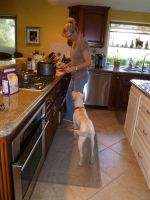 Dog in the kitchen by BlackFlameVampire