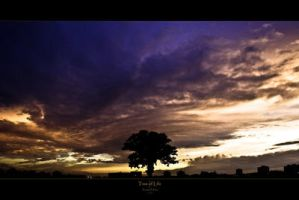 Tree of Life I by zolars by Scapes-club