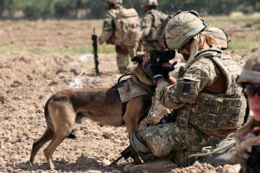 Military Dog by MilitaryPhotos