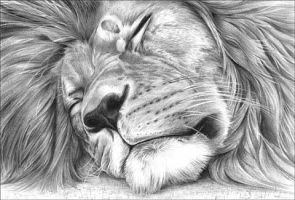 Sleeping Lion by Paperpony112