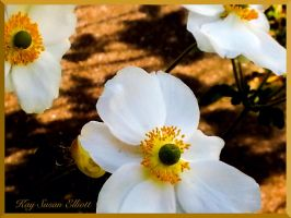 Gold On White by Kaysusanelliott