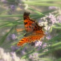 Spotty butterfly by lostknightkg