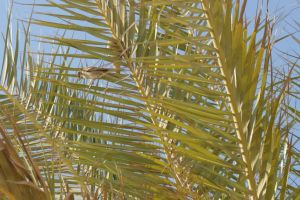 bird in palm tree at Israel by picture-melanie