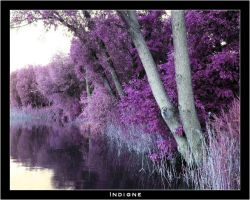 Violet plants 1 by Indigne