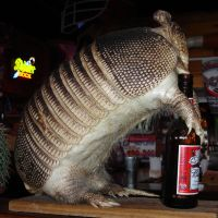 Drunk Armadillo by ShadowRunner27