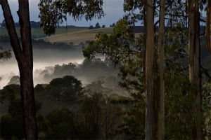 Valley Mist by Dryad-8