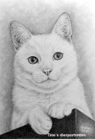 Cat portrait by Horsenart95