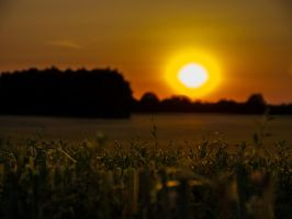 Harvested Cornfield by v0t3x-photography