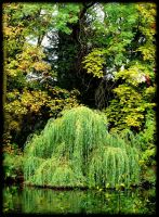 Waterfall of autumn coulours by pagan-live-style