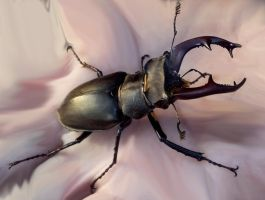 Stag beetle by AntonioCremades