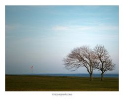 The Two Trees by budmedia