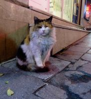 Ist cat by contemporaryhart