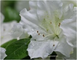 White Droplets by SilkenWinds
