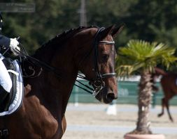 National Dressage and Jumping_34 by CalyHoney