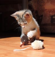 My mice! by Adeleene