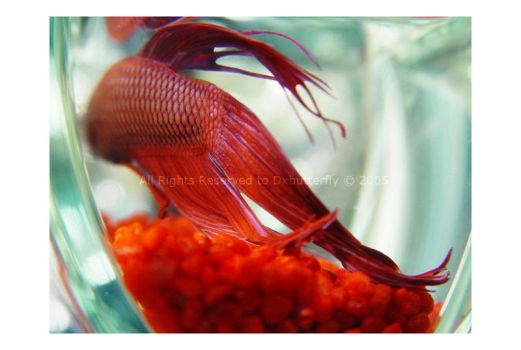 Red Fish by DxButterfly