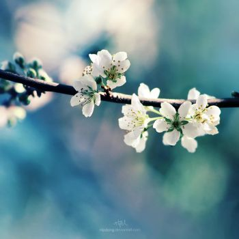Spring blossoms by ntpdang