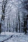winter forest III by Wilithin