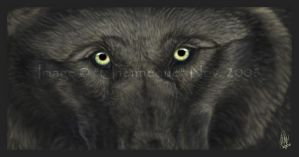 Wolf Vision - 2 by chenneoue
