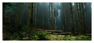 Forest by Wilce