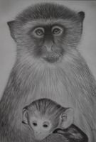 Vervain monkey and baby by davebennett007