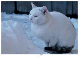 Winter Cat by idjet96