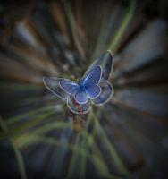 butterfly effect by lisans