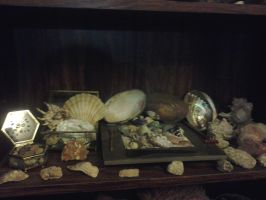Shelf Three - Ode to Shells by LMW-Creations
