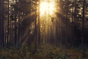 Morning Rays by Stridsberg
