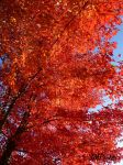 Flaming Leaves by JMPorter