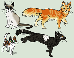 Realistic cat designs (TAKEN) by JocastaTheWeird