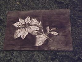 Charcoal Flower by Snapefan83