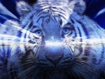 blue tiger by ilnanny