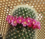 Blooming Cactus by RevelloDrive1630