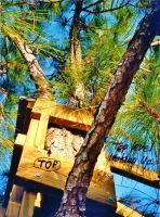 Our Treehouse Built by My Husband {Photo 56} by Empress-XZarrethTKon