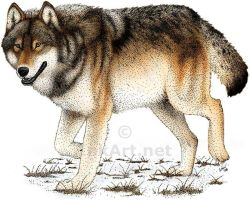 Timber Wolf by rogerdhall