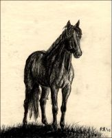 Charcoal Horse by equusrevelrous