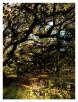 Live Oak by sees2moons