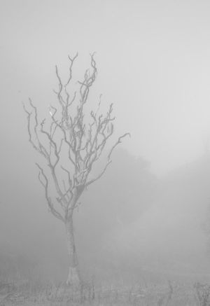 Lost in mist and only silence. by lomatic