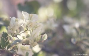 White Flowers by VarArt9