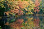 Autumn Pond by BlueSolitaire