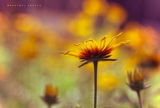 Warmth in bloom by Cochalita