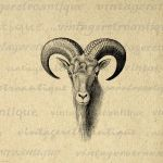 Goat Head Digital Graphic No.496 by VintageRetroAntique